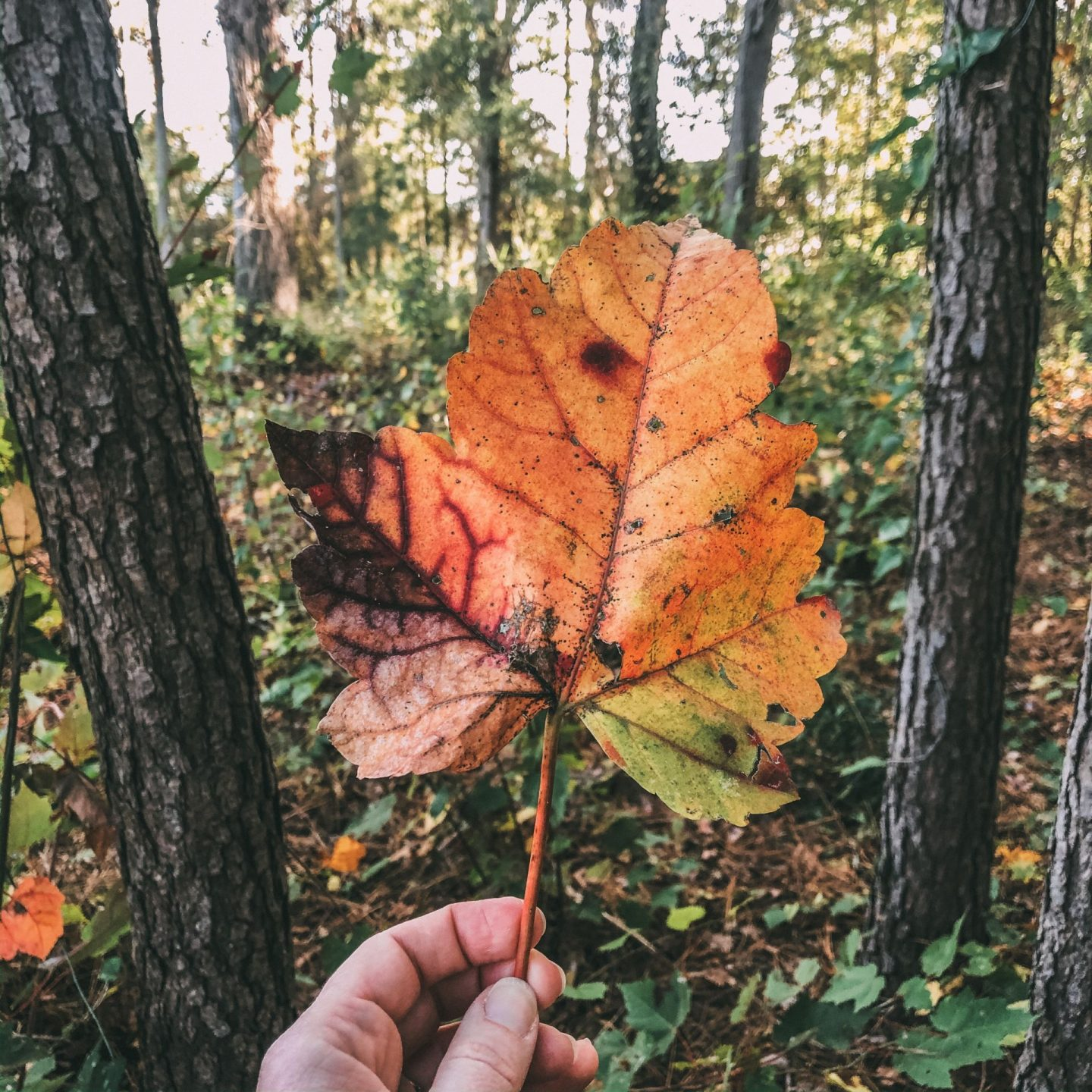NC blogger Rebecca Lately shares 5 things to love about autumn.  If you are sad about the end of summer or also love autumn, check this out!