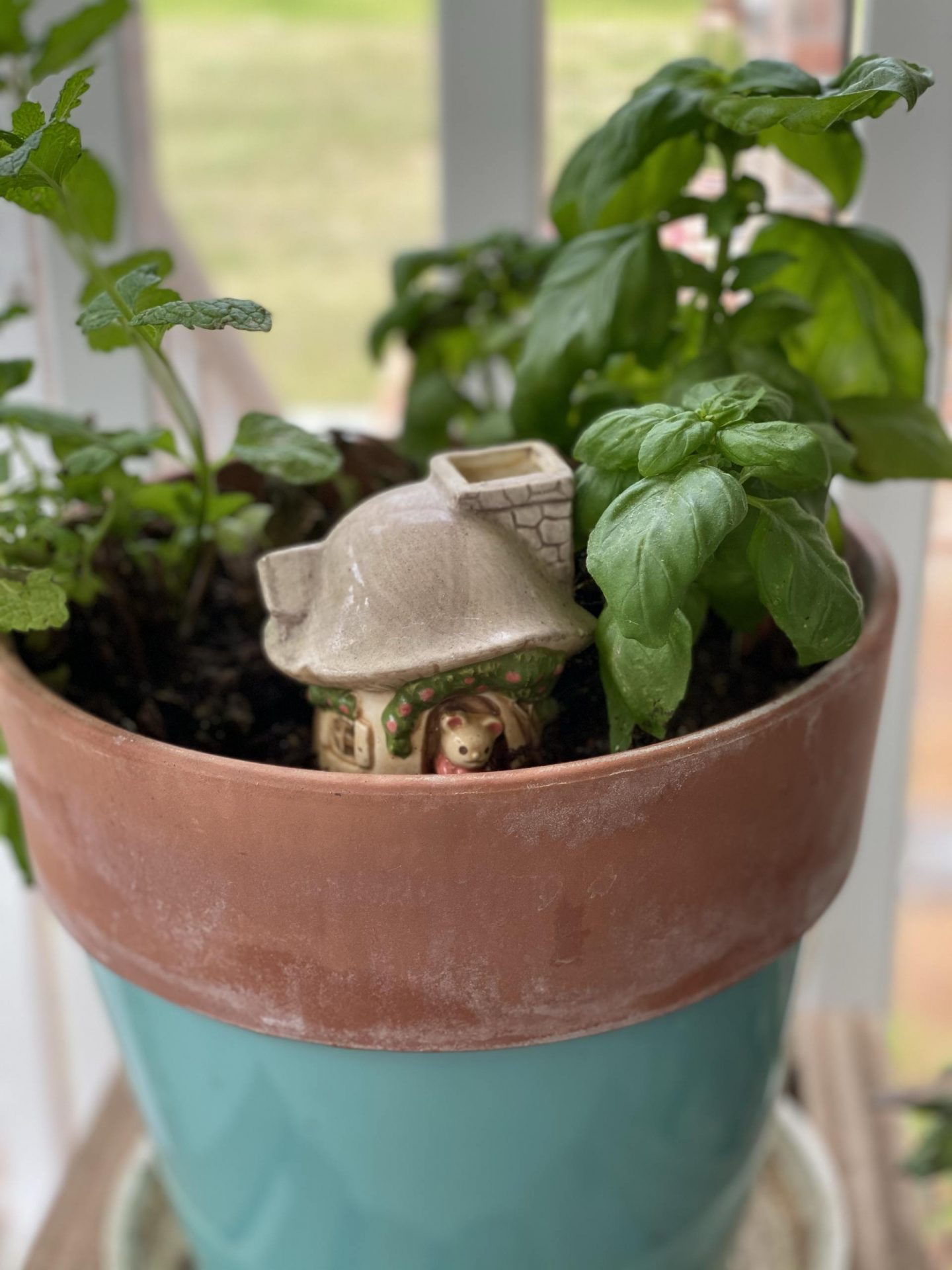NC blogger Rebecca Lately is sharing her favorite places to buy plants online. If you love house plants, be sure to check this out!